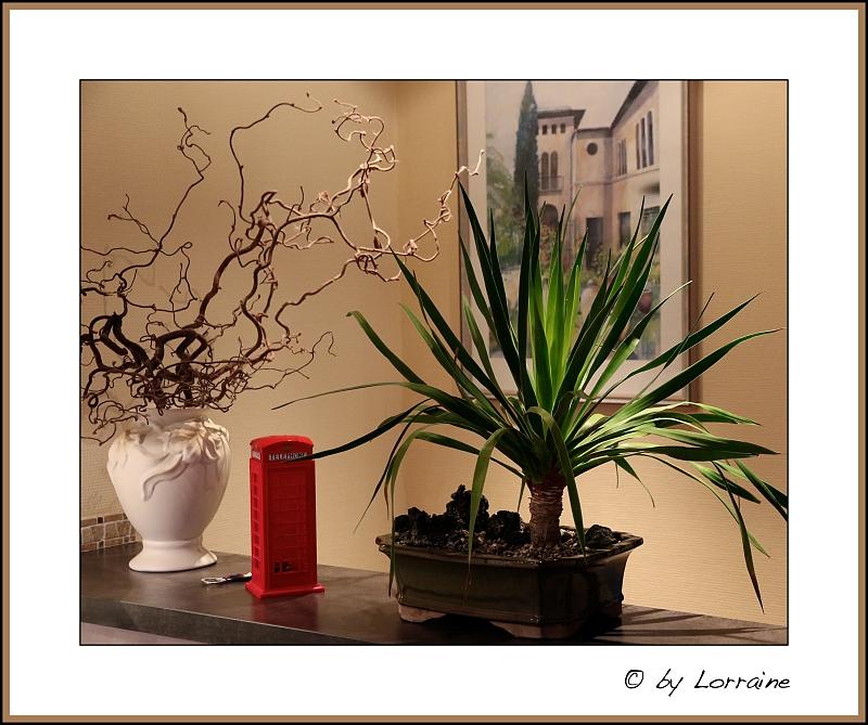 re dracaena draco kanarischer drachenbaum 2. Black Bedroom Furniture Sets. Home Design Ideas