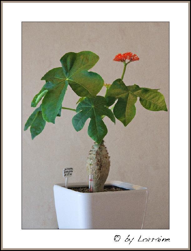 rund um den garten welche pflanzen fressen ziegen nicht. Black Bedroom Furniture Sets. Home Design Ideas