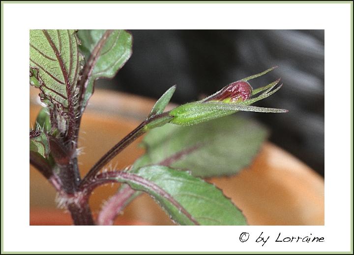 wer kann diese pflanzen bestimmen pflanzenbestimmung. Black Bedroom Furniture Sets. Home Design Ideas