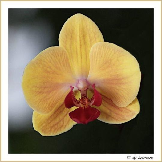 die sch nsten orchideen bilder mein sch ner garten forum. Black Bedroom Furniture Sets. Home Design Ideas