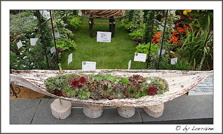 anregung um wanne mit hauswurzen zu bepflanzen pflegen schneiden veredeln green24 hilfe. Black Bedroom Furniture Sets. Home Design Ideas