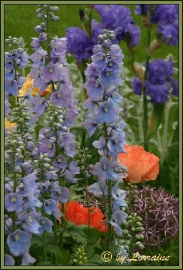 iris iridaceae beliebte pflanzen erfahrungen green24 hilfe pflege bilder. Black Bedroom Furniture Sets. Home Design Ideas