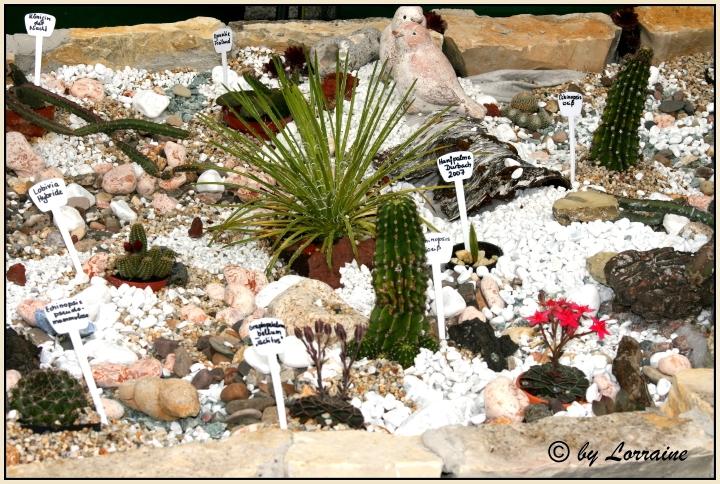 Mein Neues Kakteen Hochbeet Mein Schoner Garten Forum