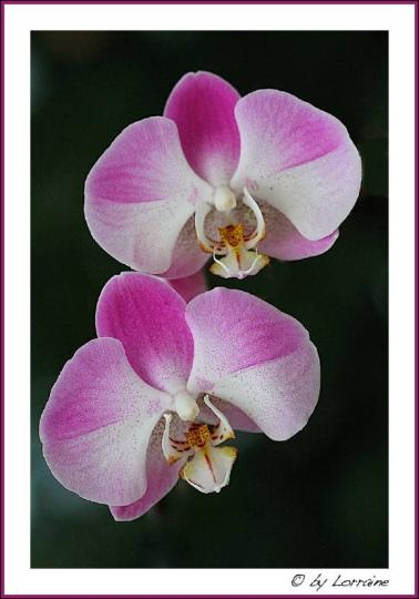 die sch nsten orchideen bilder seite 1 foto treff. Black Bedroom Furniture Sets. Home Design Ideas