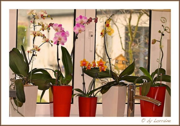 die sch nsten orchideen bilder page 3 mein sch ner garten forum. Black Bedroom Furniture Sets. Home Design Ideas