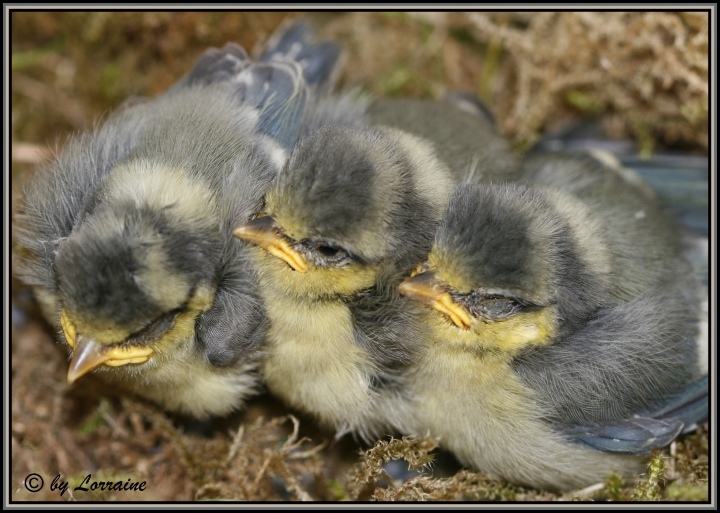 Hilfe!!!!!!! ganz dringend wegen Blaumeisen - Mein schöner Garten Forum